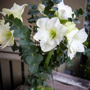 Amaryliss Bouquet White